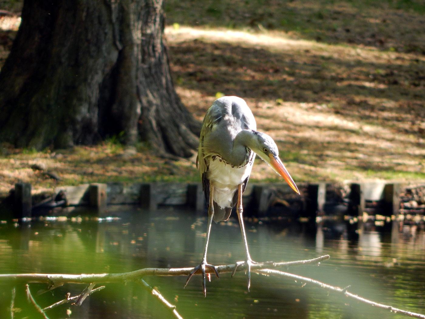 Berlin günstig erkunden: Tiergarten